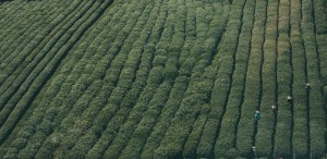 plantage-731490 960 720